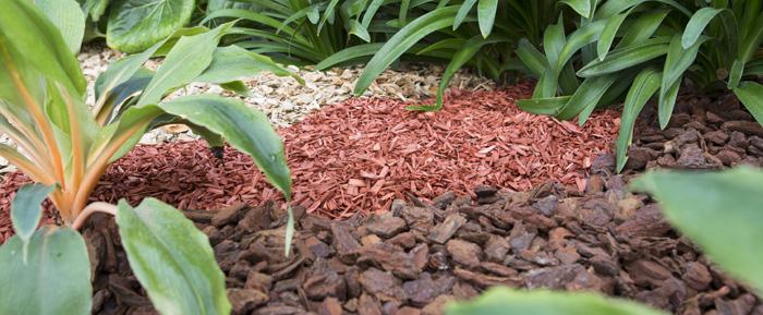 Abriga las raíces con un buen acolchado estético