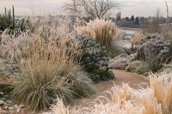 Gramineas invierno
