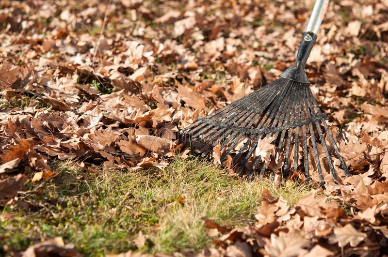 Barrer hojas secas, quitar ramas muertas, acolchar los parterres...