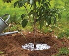 Es buen momento para planta a raíz desnuda.