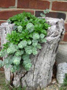 Jardineras creativas