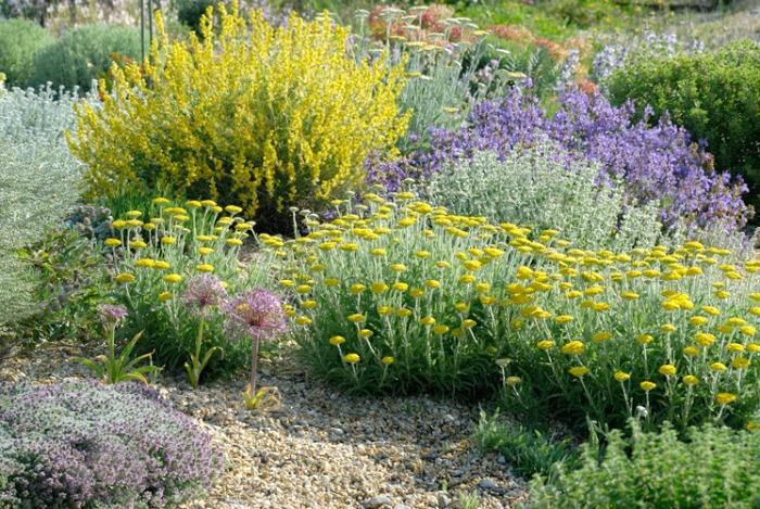 Plantas resistentes a la sequía, lúcidas y con espectacularesfloraciones.